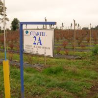 letreros plantaciones